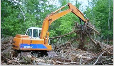 Clearing Trees with Excavator